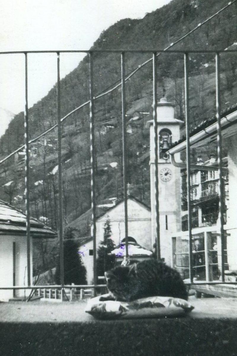 Cicogna_chiesa-con-gatto