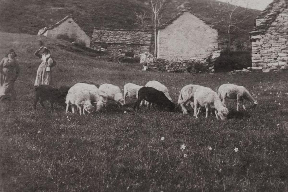 Miazzina_Pala-1908