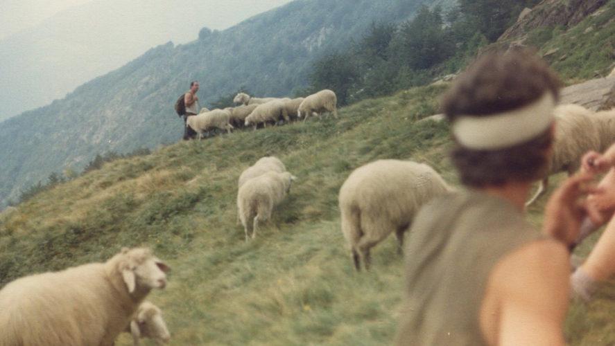 Trontano-pecore-1992