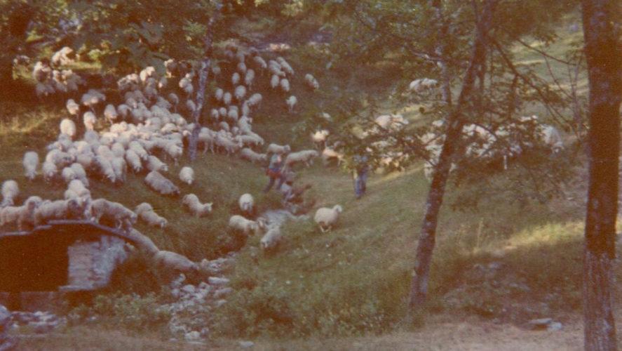Trontano_pecore-verigo-1992