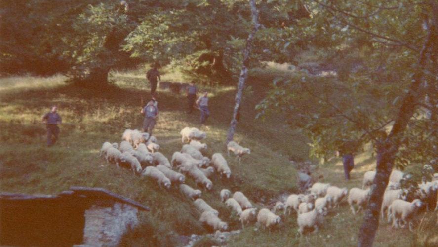 Trontano_pecore-verigo-1992 (3)