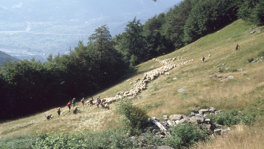 Trontano_transumanza-1995 (5)