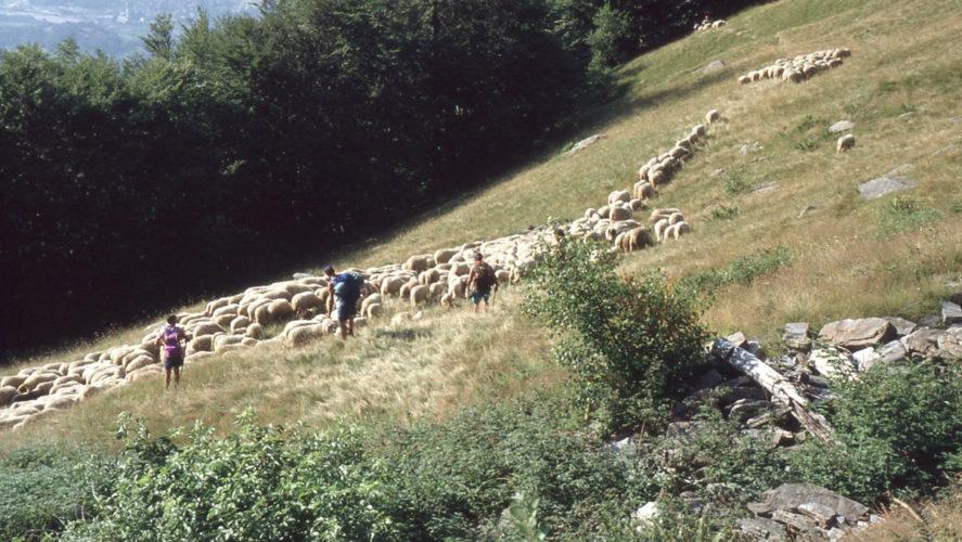 Trontano_transumanza-1995 (6)