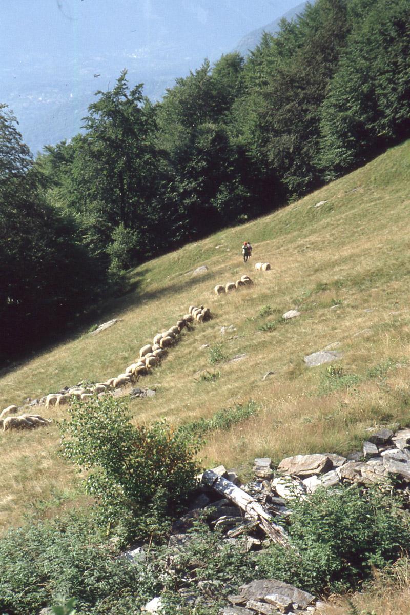 Trontano_transumanza-1995 (7)